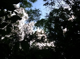 Canopy of trees.