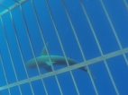The shark swimming under the cage.