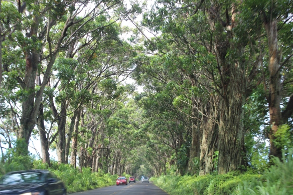 Maluhia Road (Tunnel of Trees)