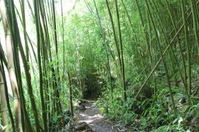 Four Waterfalls Hike 13