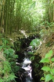 Four Waterfalls Hike 17