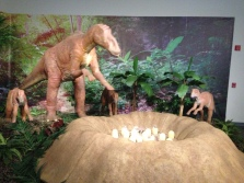 Dinosaur exhibit!