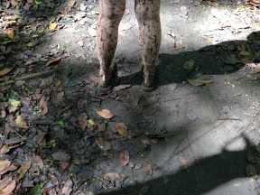 Covered in mud!