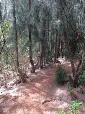 Olomana Trail 9