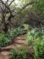Olomana Trail 10