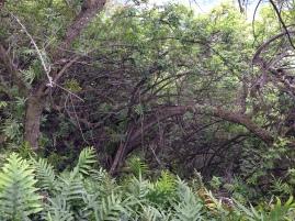 Olomana Trail 11