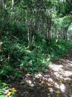 Hau`ula Loop Trail 3
