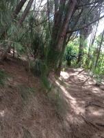 Hau`ula Loop Trail 5