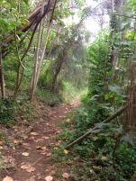 Hau`ula Loop Trail 7