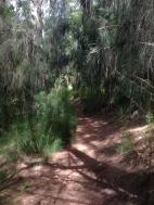 Hau`ula Loop Trail 8