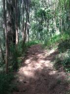 Hau`ula Loop Trail 9