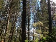 Hau`ula Loop Trail 13