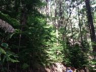 Hau`ula Loop Trail 14