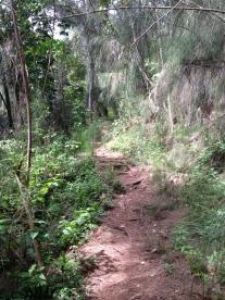 Hau`ula Loop Trail 16