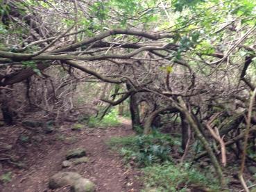 Hau`ula Loop Trail 23