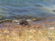 Sea Turtles 4