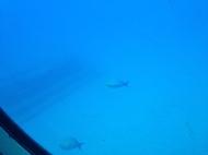 Atlantis Submarine 7