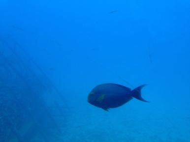 Atlantis Submarine 12