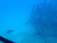 Atlantis Submarine 13