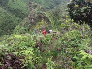 Tripler Ridge to Haiku Stairs 23