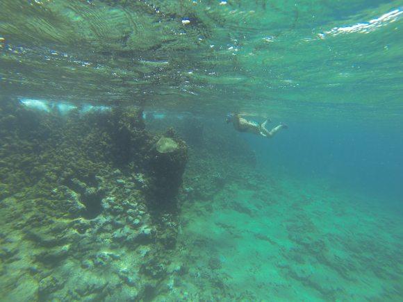 Shark's Cove 5