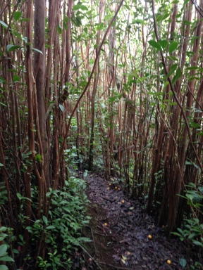Tripler Ridge to Haiku Stairs 6