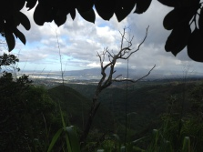 Tripler Ridge to Haiku Stairs 8