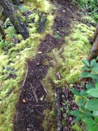 Cool moss along the trail.