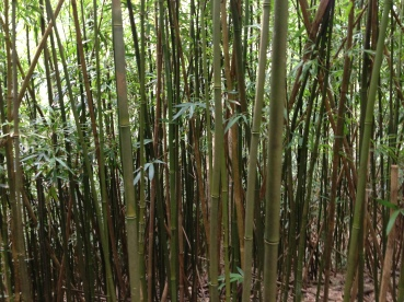 The bamboo forest...where I slipped multiple times the first time I hiked the stairway