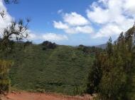 Hawaii Loa Ridge Trail 3