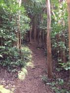 Hawaii Loa Ridge Trail 8