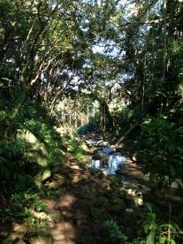 Judd Trail 4