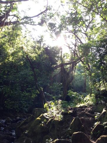 Judd Trail 5