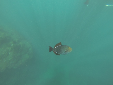 Na Pali Coast Snorkeling 1