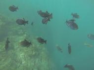 Na Pali Coast Snorkeling 2