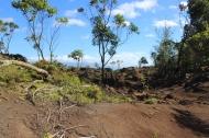 Munro Trail 2