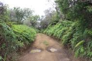 Munro Trail 13