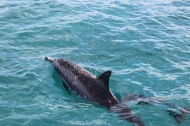 First Encounter Spinner Dolphins 4