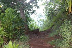 Hanakapi'ai Falls Trail 4