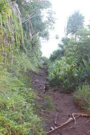 Hanakapi'ai Falls Trail 13