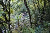 Hanakapi'ai Falls Trail 38