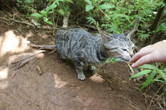 We found a cat on the trail back. So sweet!