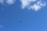 Birds flying everywhere.