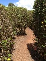Dole Plantation 4