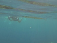 Me swimming with a Needlefish. They were everywhere.
