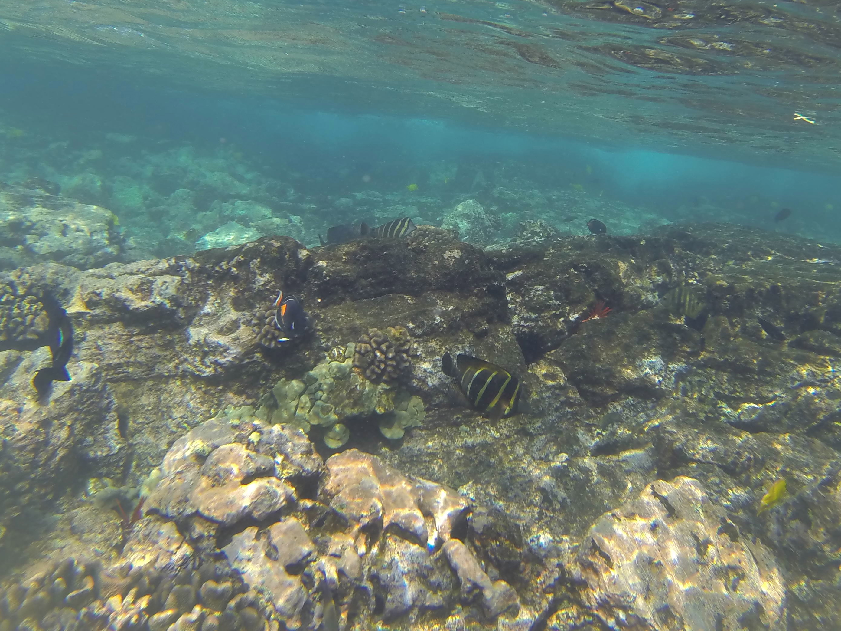 Captain Cook Snorkel Tours