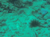 Nautilus Reef 4