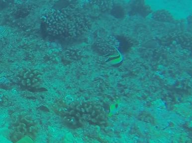 Nautilus Reef 6