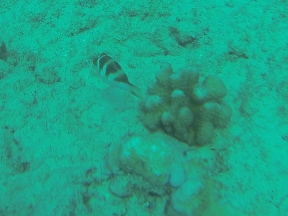 Nautilus Reef 7