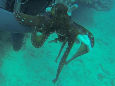 Nautilus Reef 11